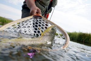 14 Best Fly Fishing Nets – Premium Choice of Pro Anglers
