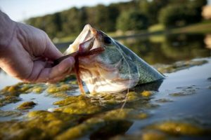 Best Time of Day to Fish For Bass – Complete Guide From the Experts