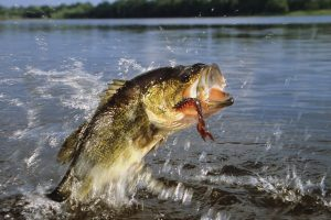 11 Pro Angler Early Spring Bass Fishing Tips to Bag a Massive Catch!
