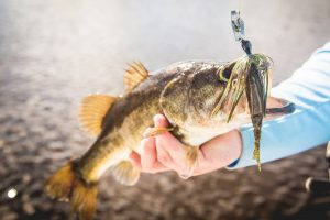 How To Tie On A Chatterbait – Quick and Easy Tips from the Pros