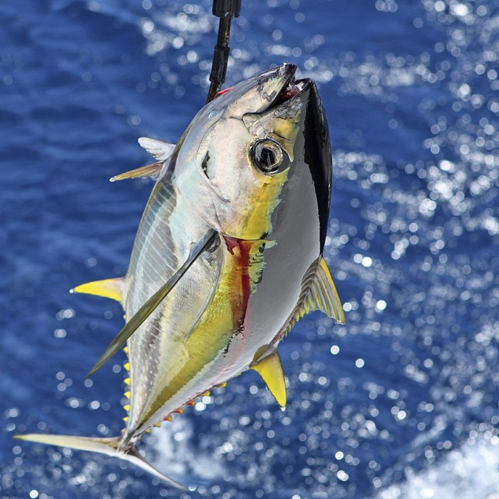 How to Buy the Best Tuna Fishing Reels