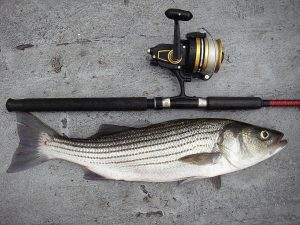 The 10 Best Striper Fishing Rods for Your Next Fishing Trip